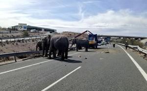 Los elefantes, circulando por la autopista.