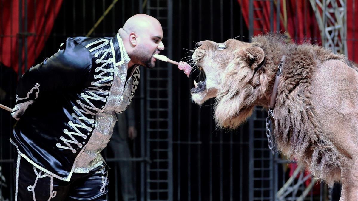 El domador Mohamed Sayed El Helwe actua con un leon en el Circo Nacional de Egipto