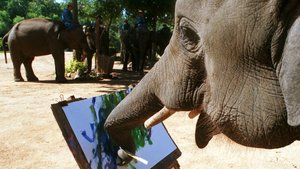 Un elefante asiático muestra su destreza con la pintura.
