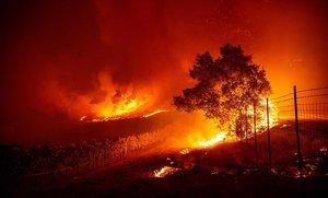Las llamas entran en un viñedo de Geyserville durante el incendio que está asolando California.