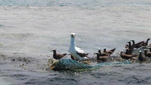 Aves marinas posadas sobre residuos plásticos.