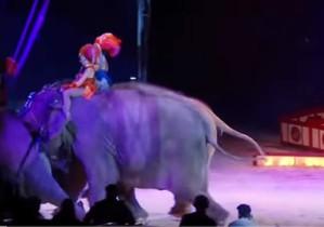 Momento en que dos elefantes empujan contra el público a otro elefante en un circo en Alemania.