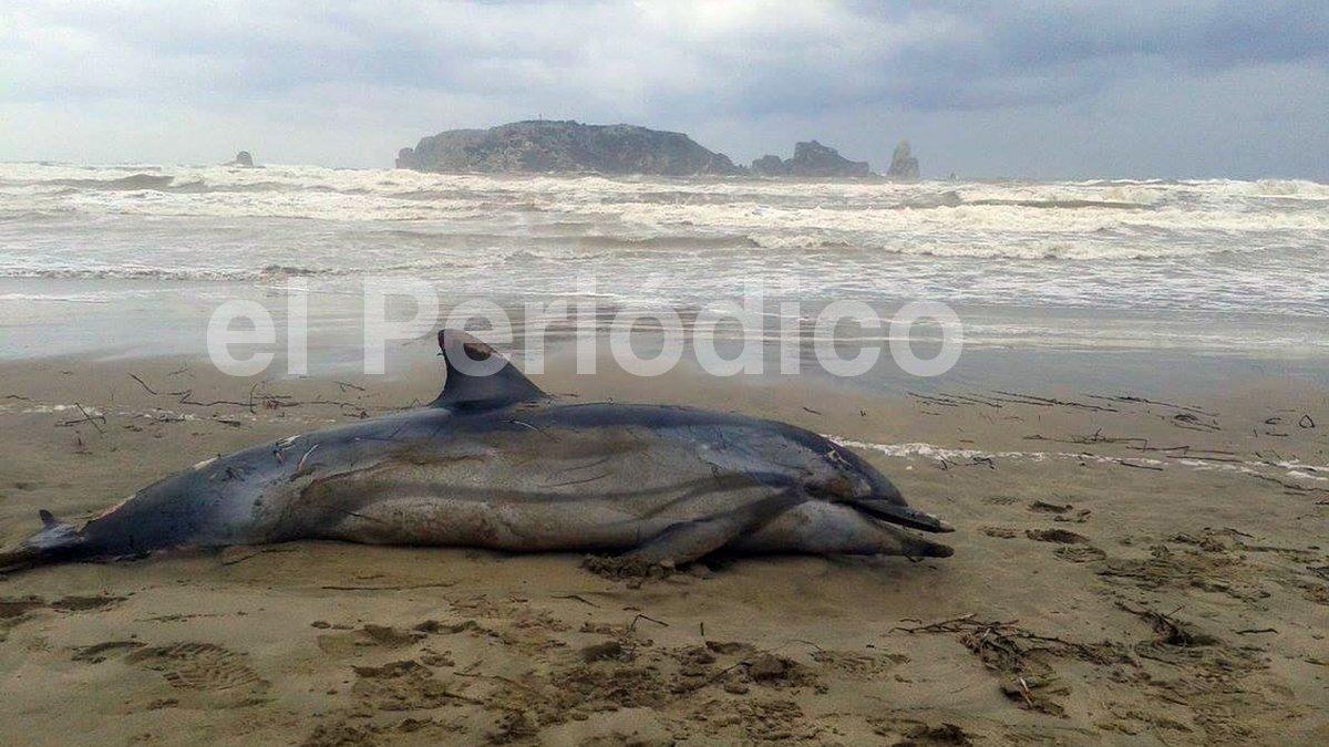 Aparece un delfín muerto en la playa de L'Estartit
