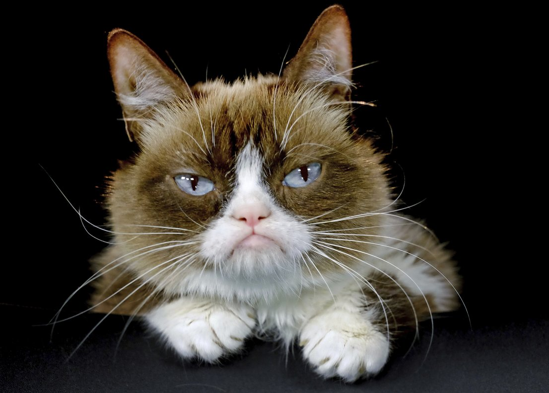 Ha muerto Grumpy Cat, la famosa gata de los memes de Internet