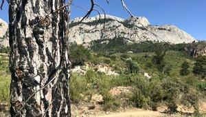 La base quemada de unpino, 10 años después del incendioen Horta de Sant Joan. Al fondo, a la derecha, la roca bajo la que perecieron los bomberos.