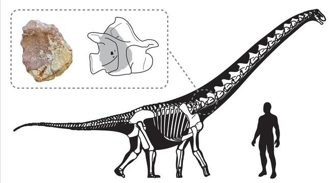 El último titanosaurio de Europa