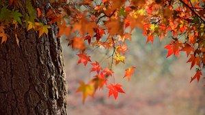 Hojas secas de un árbol.