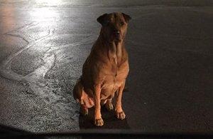Una perra se hace pasar por callejera a las puertas de un restaurante para comer hamburguesas