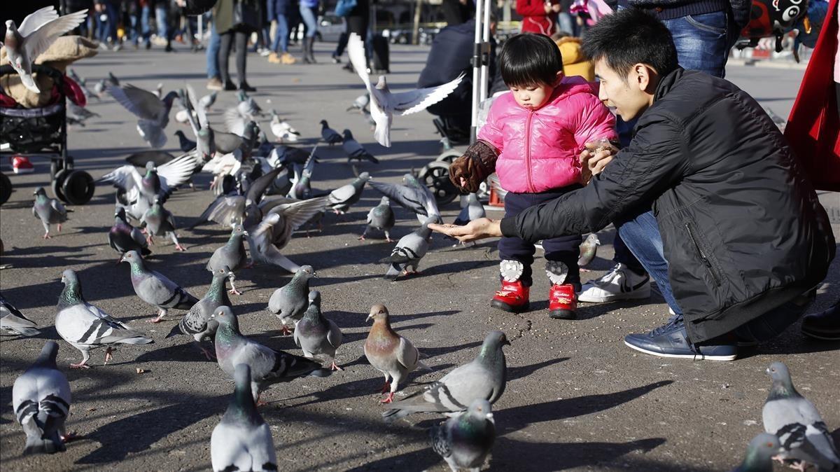 Una familia da de comer a las palomas de la plaza de Catalunya.