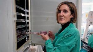 El CSIC rebrà 5 milions d'euros de Mapfre per accelerar la investigació sobre el Covid-19