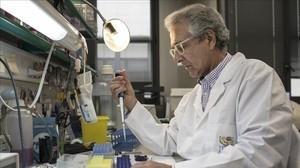 Joan Guinovart, director del Institut de Recerca Biomèdica de Barcelona, en su laboratorio.