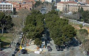 La avenida de Joan XXIII, con laarboleda que los vecinos temen que desaparezca, el pasado sábado.