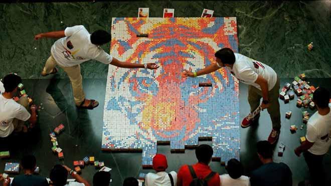 Un tigre de Bengala amb 1.200 cubs de Rubik