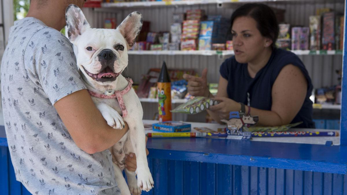 VÍDEO CON CONSEJOS. Expertos de Dogged nos explican una serie de recomendaciones para que nuestras mascotas soporten mejor el ruido de los petardos.