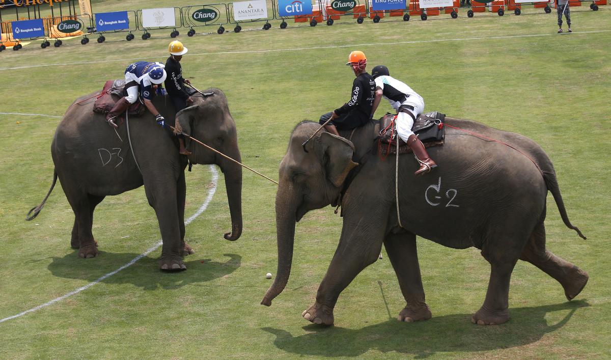Elefantes y jugadores, en plena competición.