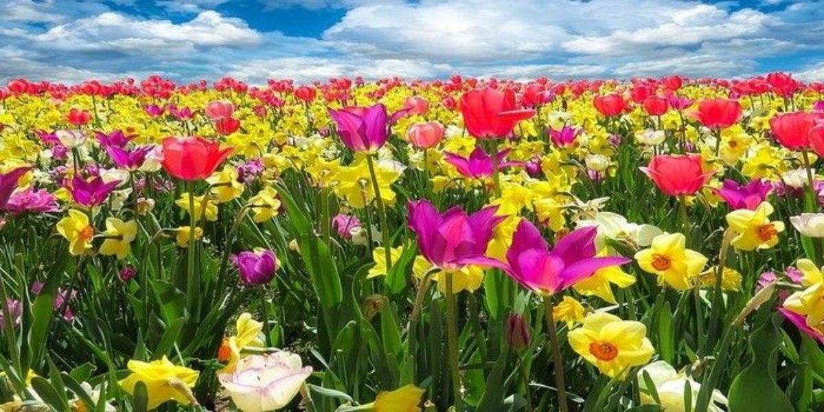 Equinoccio De Primavera 20 Frases E Imágenes Sobre La Primavera