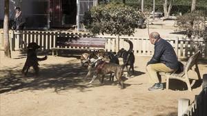 """""""Ara tenim tancats els nens i lliures els gossos"""""""
