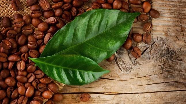 Les propietats aprimadores del cafè verd