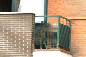 El perro Excalibur, en el balcón del domicilio de Teresa Romero y Javier Limón, este miércoles.