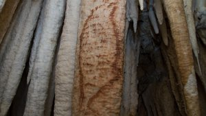 Detalle de una de las pinturas rupestres de Nerja.