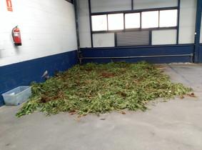 Las 2.000 plantas de marihuna decomisadas este verano se ha guardado durante más de tres semanas en el parking interior del edificio por falta de espacio.