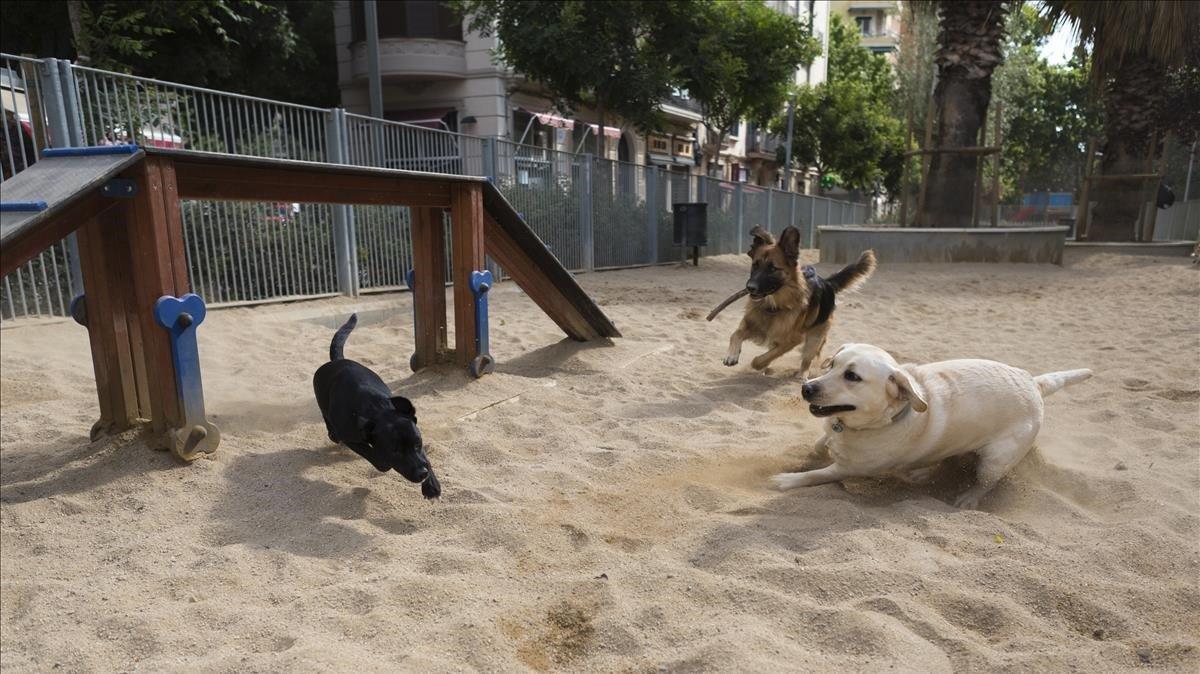Unos perros juegan en la zona de recreo para perros de la avenida de Mistral, esta semana.