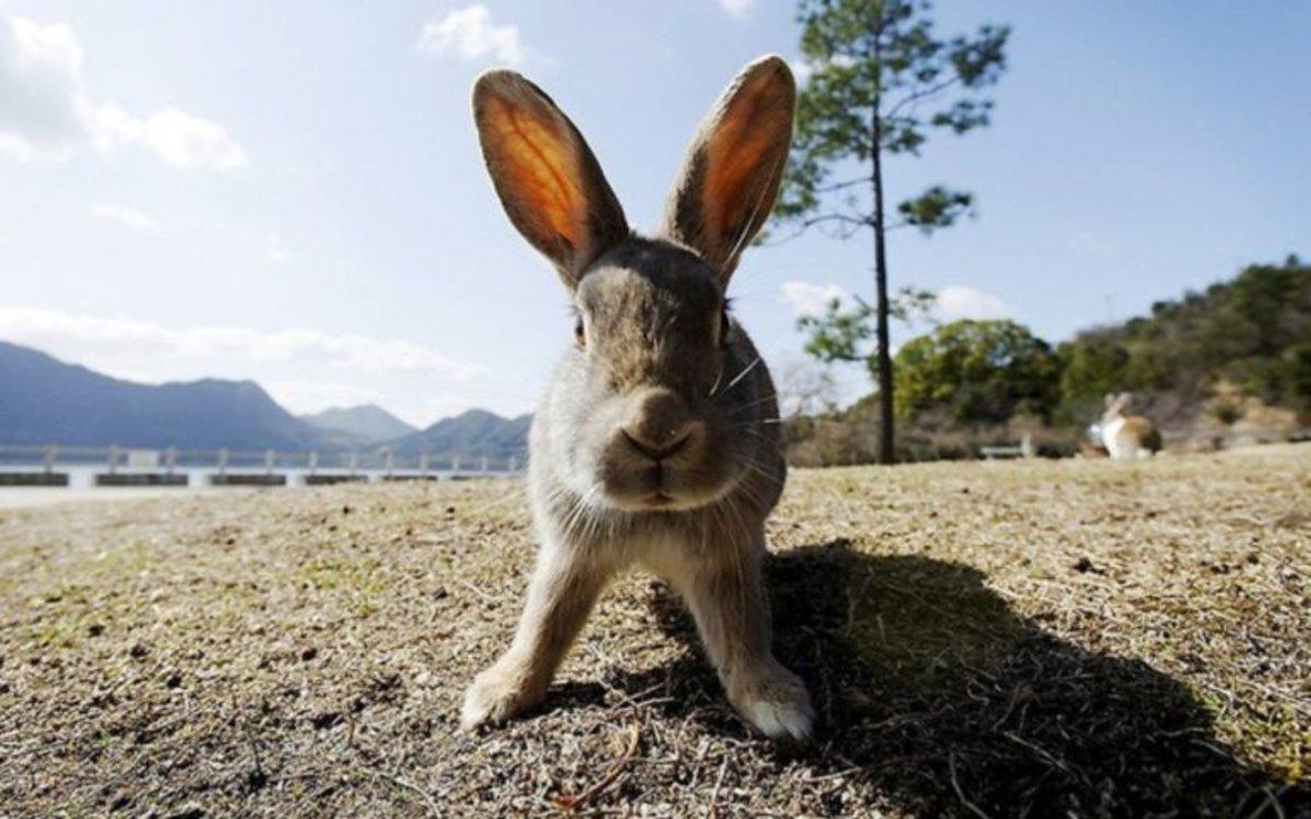 Ejemplar de conejo.