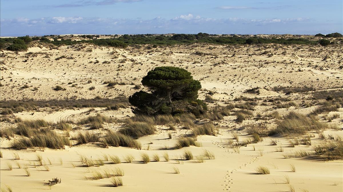 Dunas en el parque nacional de Doñana, en Huelva.
