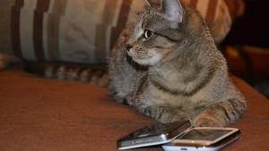 Imagen de archivo de un gato con un teléfono móvil.