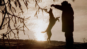 Un hombre juguetea con su perro al atardecer en un parque ruso.