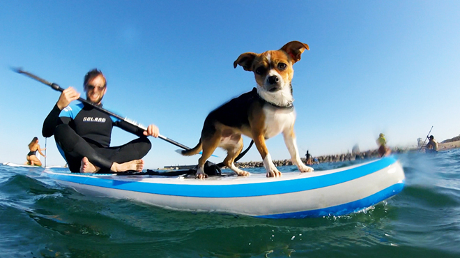 Paddle surf perruno, organizado por PAT Educadora Canina.