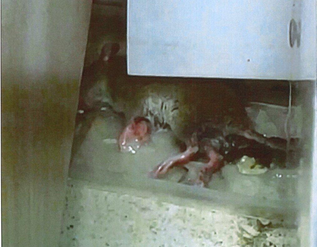 Una rata muerta, bajo uno de los muebles en la zona de comedor de la comisaría de la Ertzaintza en Oiartzun (Guipúzcoa).