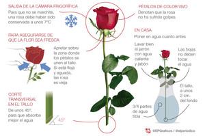 10 consejos para conservar tu rosa de Sant Jordi
