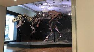 Stan, el ejemplar de Tiranosaurio-rex que se va a subastar en la sede de Christie's de Nueva York.