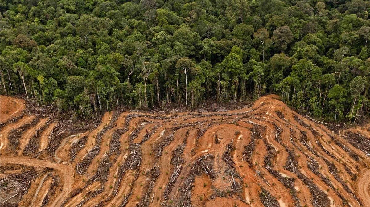 L'emergència per la sisena extinció se suma a la del canvi climàtic