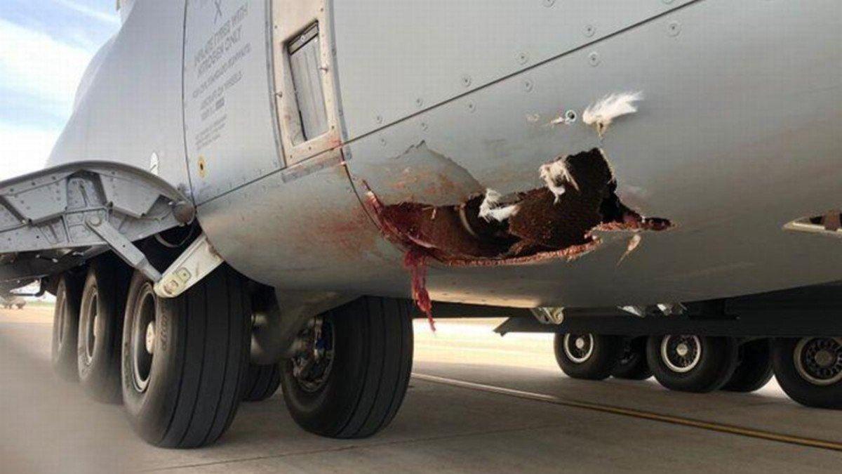 Un buitre provoca un agujero en un avión militar en Zaragoza