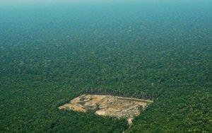 Deforestación por la tala ilegal en el Amazonas, en Brasil.
