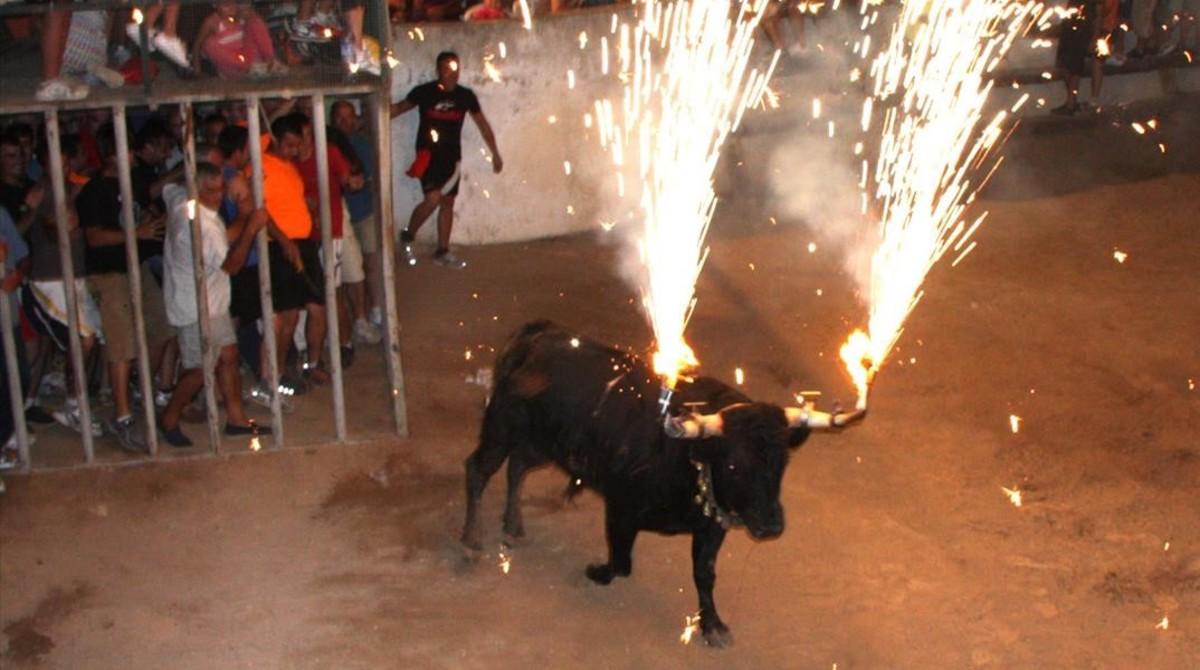 Toro embolado en Masdenverge, Montsià.
