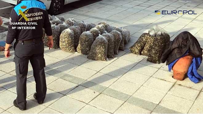 Desmantelada una red internacional que introducía almeja japónica contaminada.