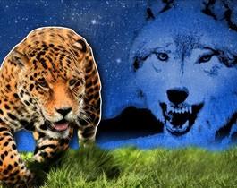 Un lobo en el Amazonas