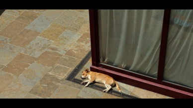 La venganza de un hombre al perro que le despertó ladrando por la mañana