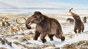 Mamuts, animales extinguidos, en un dibujo.
