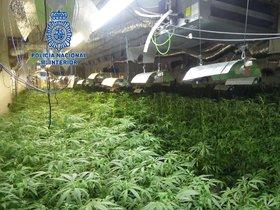 Imagen de una de las naves de Mataró, donde se han hallado más de 4.000 plantas de marihuana.