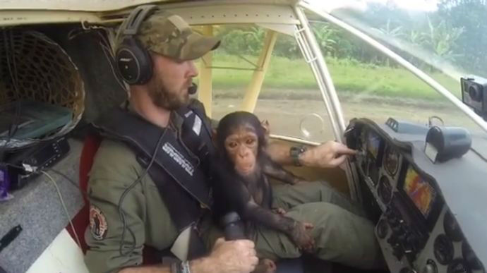 L'emotiu viatge en avió d'un pilot i la cria de ximpanzé que acaba de salvar