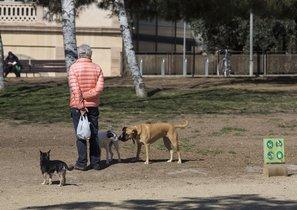 Perros en el parque de la Estació del Nord.