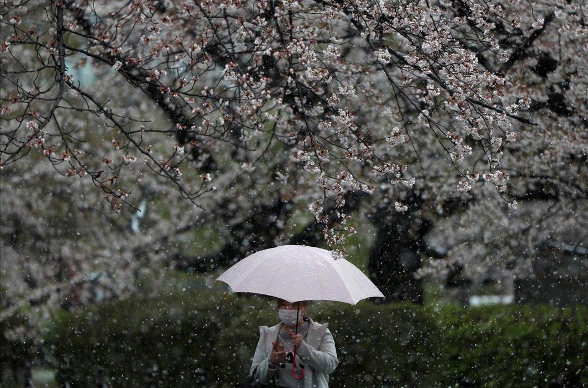 Una mujer con mascarilla pasea bajo los cerezos en flor en Tokio.