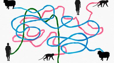 La clonació de macacos és una notícia d'interès discutible
