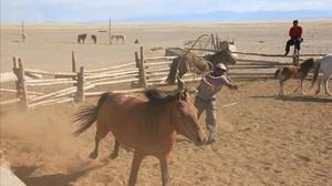 zentauroepp38303555 criador de caballos de mongolia a la captura de caballos ko170507144804