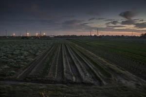 Agricultura local Campos de cultivos en el Parc Agrari del Baix Llobregat.
