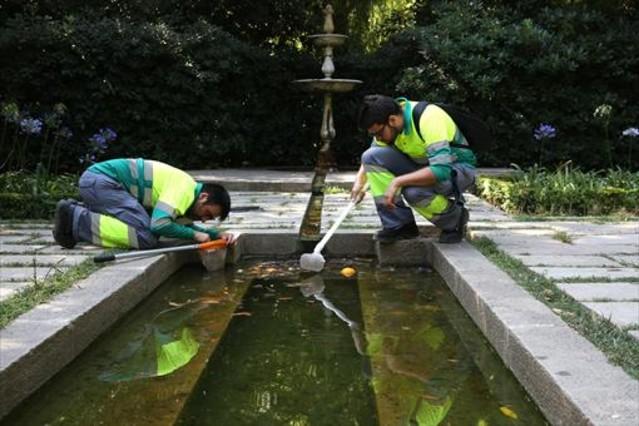 Dos técnicos de la ASPB buscan larvas de mosquito tigre en uno de los estanques de los jardines de la Tamarita, en el distrito barcelonés de Sant Gervasi.